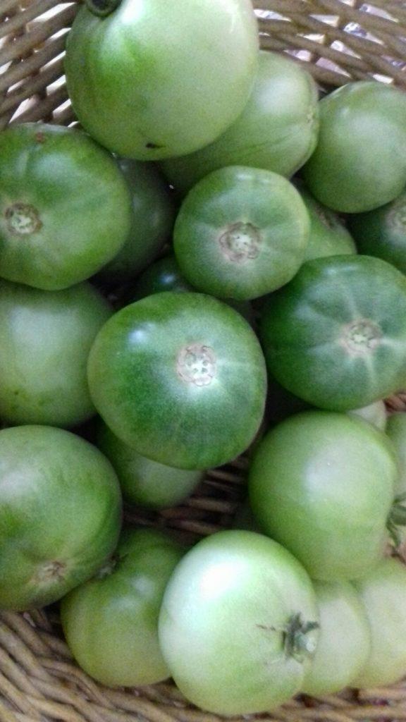 Πράσινες ντοματούλες τουρσί - ηχωμαγειρέματα - 1