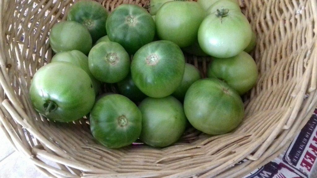 Πράσινες ντοματούλες τουρσί - ηχωμαγειρέματα - 2