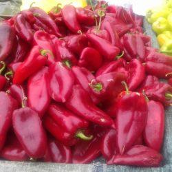 Οι κόκκινες, Φλωρινιώτισσες πιπεριές στις δόξες τους