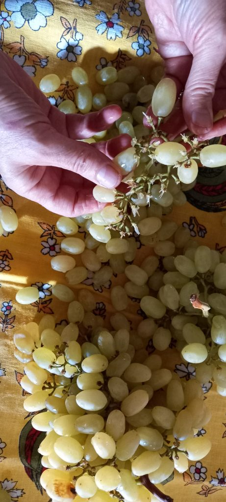 γλυκό κουταλιού σταφύλι - 6